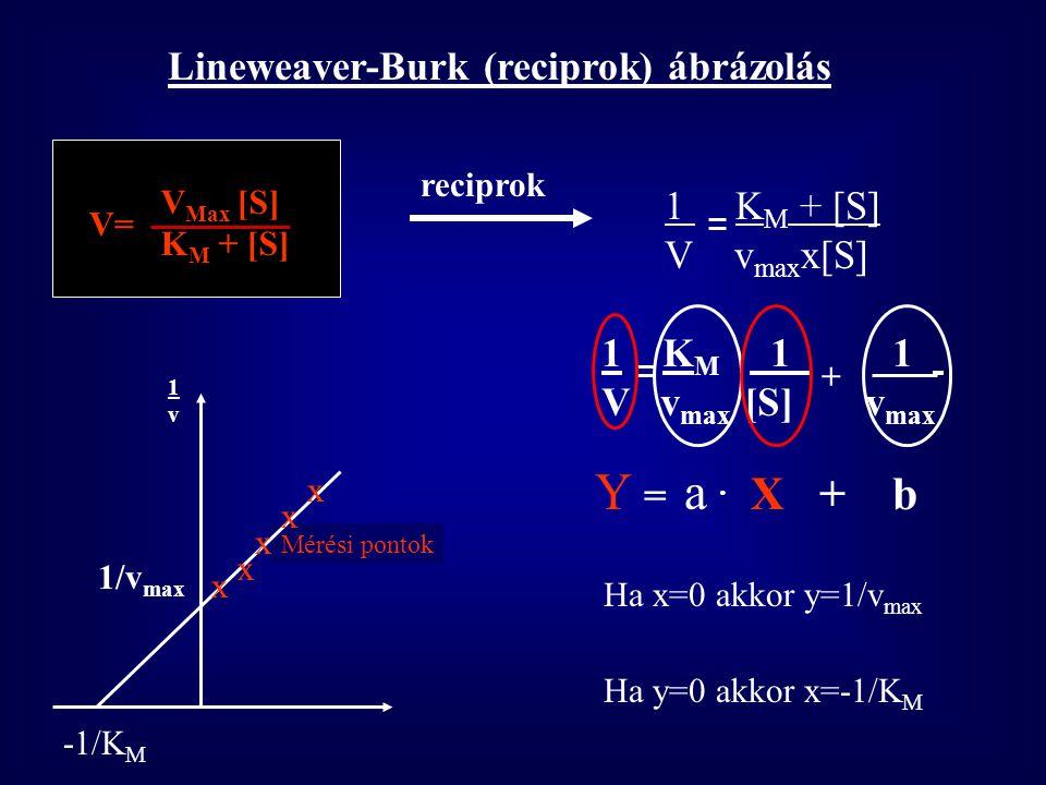 Y = a . X + b Lineweaver-Burk (reciprok) ábrázolás 1 KM + [S]